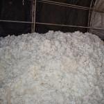 Cotton9